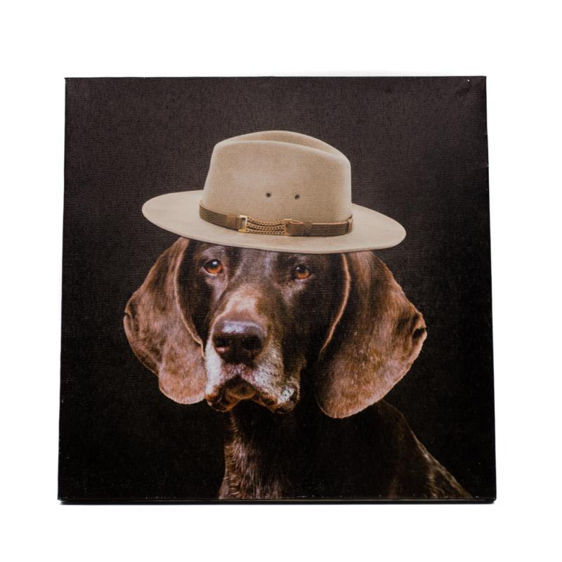 Német vizsla portré divatos kalapban