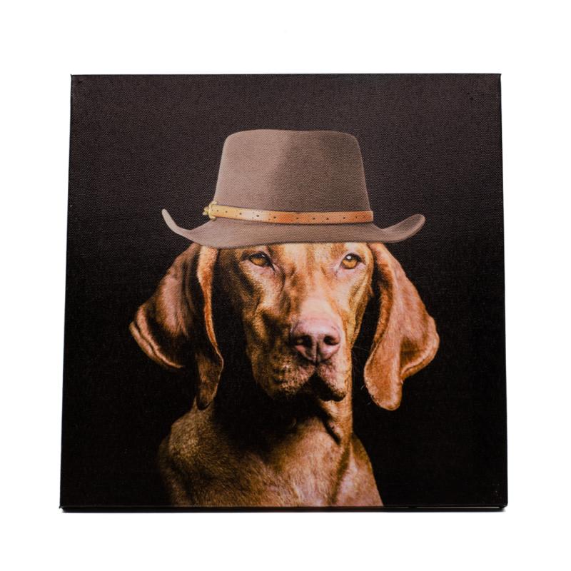 Magyar vizsla portré divatos kalapban