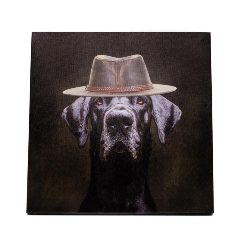 Fekete labrador portré divatos kalapban